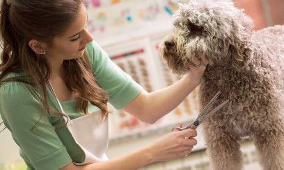 dog grooming at easton college