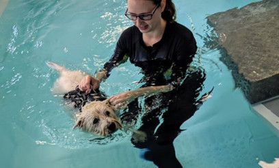 hydrotherapy for dogs at easton college